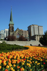 tulips-church