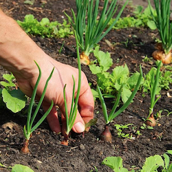 Devotion: Seeds or Weeds?